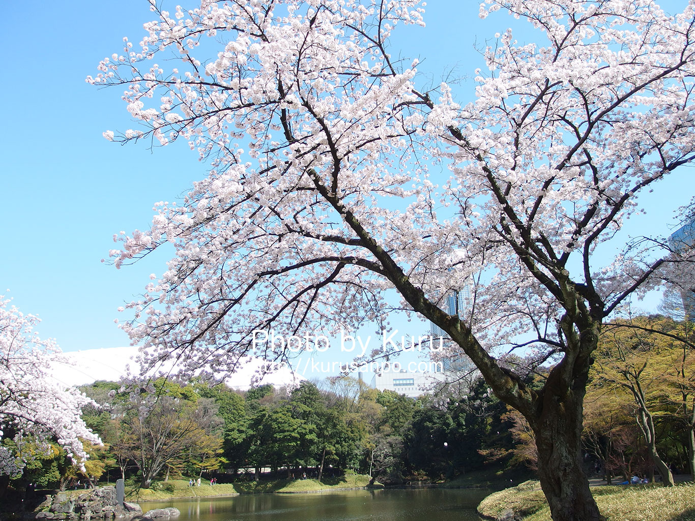 小石川後楽園に満開の桜を見に行ってきたよ♪[東京・文京区]